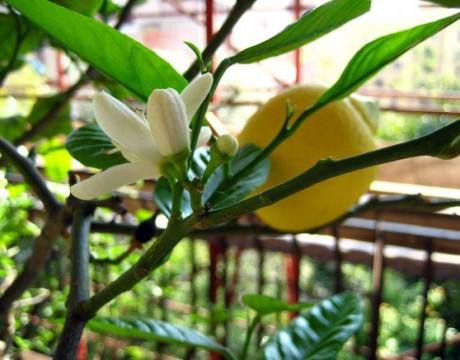piante-frutta-domestiche